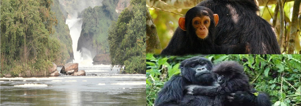 full-pack-chimp-gorilla-murchison-falls